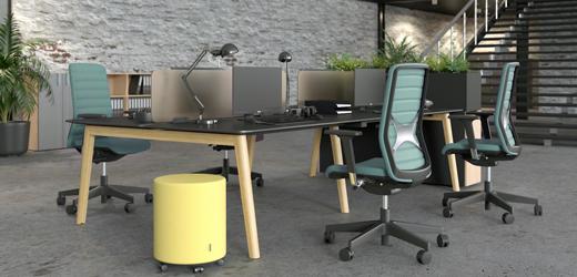 Cat - Duo-bench bureaus